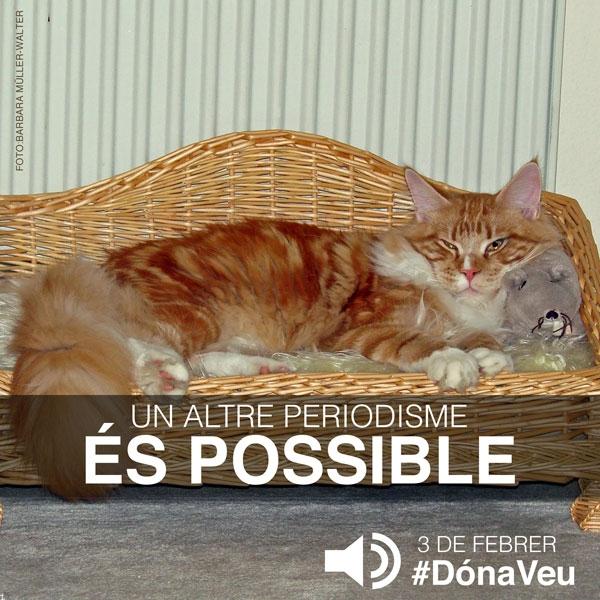 #DónaVeu -  Anuncis per a xarxes socials - FabrikaGrafika Disseny Gràfic i Il·lustració